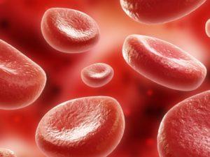 hematologia sangue