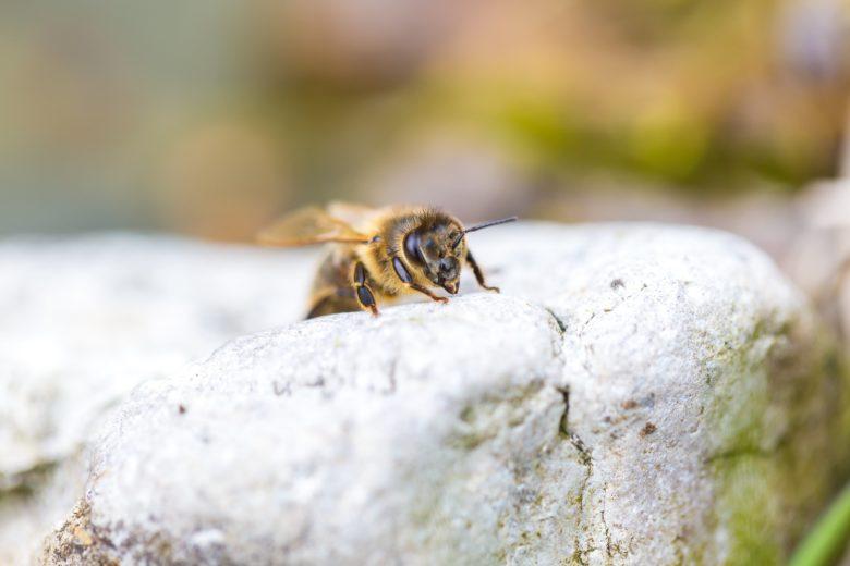 A abelha é quem produz o própolis